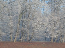 djupfryst trees Royaltyfri Bild