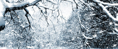 djupfryst treevinter Royaltyfri Fotografi