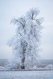djupfryst treevinter Arkivbilder