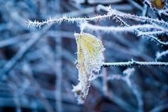 djupfryst växt Royaltyfria Bilder