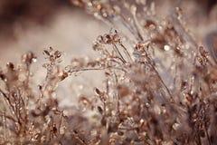 djupfryst växt Djupfryst vinterlandskap - natur Royaltyfri Fotografi