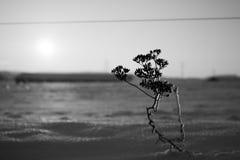 Djupfryst växt på ett djupfryst fält Royaltyfria Bilder