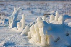 Djupfryst växt på snöig fält Arkivfoto