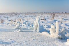 Djupfryst växt på snöig fält Arkivfoton