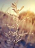 Djupfryst växt på soluppgång Arkivbild