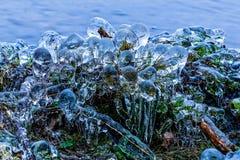 djupfryst växter Arkivfoto