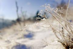djupfryst växter frostig vinter för morgonnatursnowfall Royaltyfri Foto