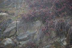 Djupfryst växtunderlandlandskap Dimma och mistbakgrund och stenar i mitten arkivbilder