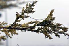 Djupfryst v?xter i vinter fotografering för bildbyråer