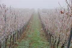 djupfryst vingård royaltyfri bild