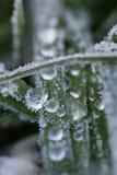 Djupfryst vinter Arkivfoto
