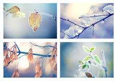 Djupfryst vinternatur Arkivbilder
