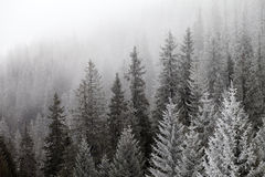 Djupfryst vinterskog i dimman Royaltyfri Foto