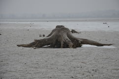 Djupfryst vinterstubbe Royaltyfri Fotografi