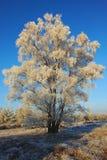 Djupfryst vitt träd i morgonen arkivfoto