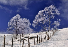 djupfryst wintry liggandetrees Royaltyfri Bild