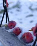 Djupfrysta äpplen i snö royaltyfria bilder