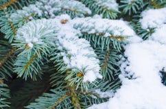 Djupfrysta barrträds- filialer i den vita vintern Frostigt vinterlandskap i snöig skog Arkivfoto