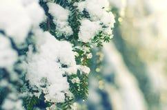 Djupfrysta barrträds- filialer i den vita vintern Frostigt vinterlandskap i snöig skog Arkivbild