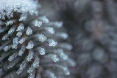 Djupfrysta barrträds- filialer i den vita vintern Vinterbakgrund med barrträds- visare Royaltyfria Foton
