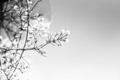 Djupfrysta filialer av träd i solig dag Naturligt vinterbakgrund royaltyfri fotografi