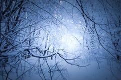 Djupfrysta filialer med den insnöade skogen i vinter Arkivbild