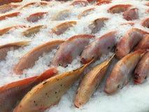 Djupfrysta fiskar Royaltyfria Bilder