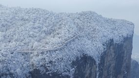 Djupfrysta gr?na sidor f?r vinter, textur, bakgrund arkivfoton