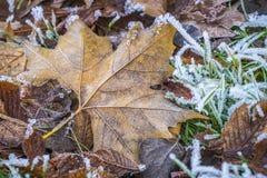 Djupfrysta gras och blad arkivbilder