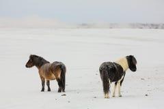 Djupfrysta hästar III Royaltyfria Bilder