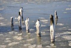 Djupfrysta Hudson River, New York City, sjunken pir arkivbilder