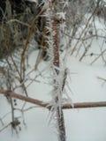 Djupfrysta röda bär rowen på trädet som täckas med frost royaltyfri foto