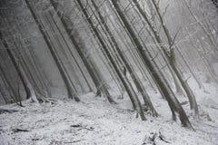 Djupfrysta skogträd under en dimmig dag Arkivbilder