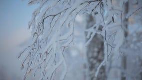 Djupfrysta snöig filialer arkivfilmer