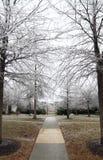 Djupfrysta träd Arkivfoton