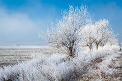 Djupfrysta träd i Karlovo område i Bulgarien Arkivfoton