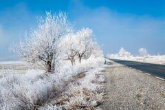 Djupfrysta träd i Karlovo område i Bulgarien Royaltyfria Bilder