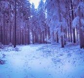 Djupfrysta träd i vinter av Polen Arkivfoton