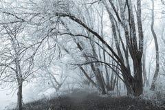 Djupfrysta träd och dimma på Park de Oeverlanden Arkivfoto