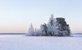 Djupfrysta träd på den kalla vinterdagen Arkivfoto
