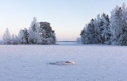 Djupfrysta träd på den kalla vinterdagen royaltyfri bild