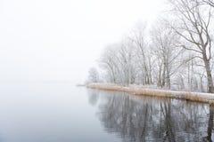 Djupfrysta träd på en dimmig shoreline royaltyfri fotografi