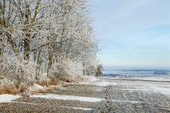 Djupfrysta träd på en solig dag i vinter Arkivfoto