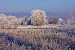 Djupfrysta träd på en solig vinterdag Fotografering för Bildbyråer
