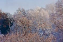 Djupfrysta träd på en solig vinterdag Arkivbilder