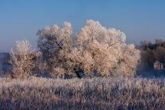 Djupfrysta träd på en solig vinterdag Royaltyfri Foto