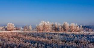 Djupfrysta träd på en solig vinterdag Arkivbild