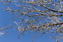 Djupfrysta trädfilialer mot himmelbakgrunden arkivfoton