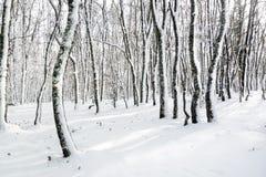 Djupfrysta trädstammar på skog Arkivfoto
