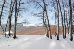 Djupfrysta trädstammar på skog och berg Arkivfoto